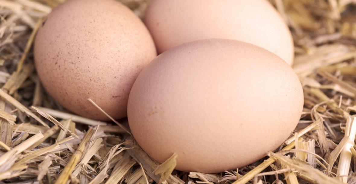 huevos la granja de pepa